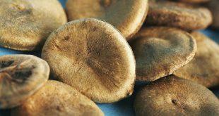 Vị thuốc mã tiền là hạt chín sấy hoặc phơi khô của loài thực vật cùng tên