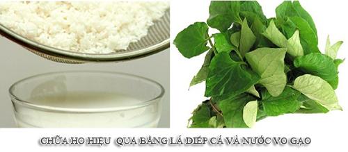 Bài thuốc chữa ho từ lá diếp cá và nước gạo