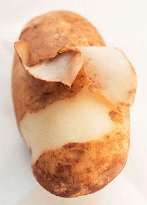 cu-khoai
