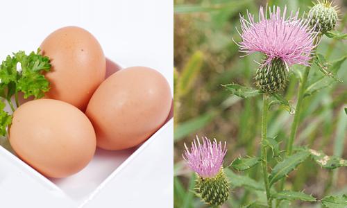 Bài thuốc chữa viêm xoang từ trứng gà và rễ đại kế